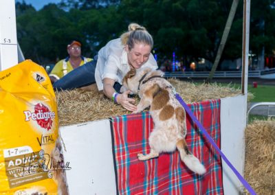 Nowra Show friday Dog Show Jump 1