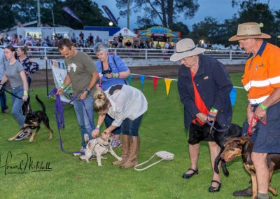 Nowra Show friday-Dog Show Jump