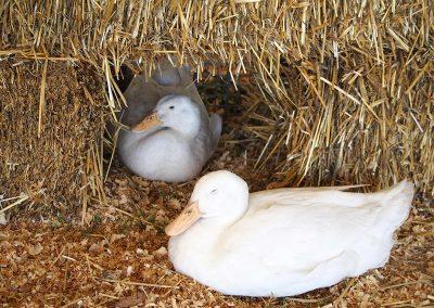 animal-nursery-2
