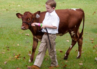 nowra-show-2020-cattle-comp