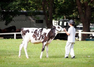 nowra-show-2020-cattle-competition