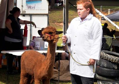 brown-alpaca